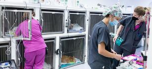 hospital veterinario madrid este